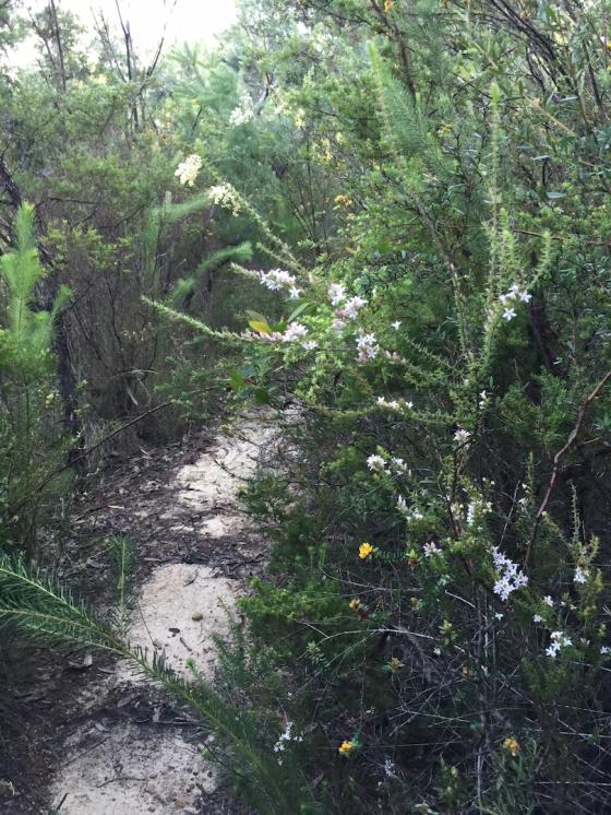 Wild Flowers Galore