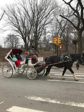 daisys-ride-through-central-park